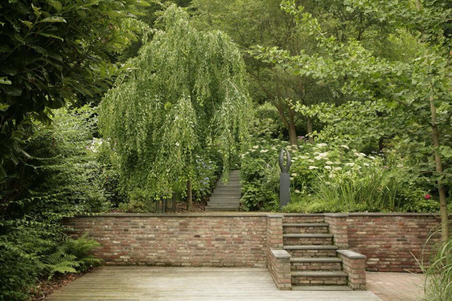 Декоративные лиственные породы деревьев, названия, фото и описание