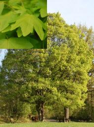 Основные формы и строение листьев