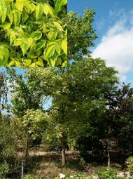 Сообщение о лиственных деревьях